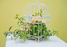 Decoration with green plant in a bird cage Stock Photos