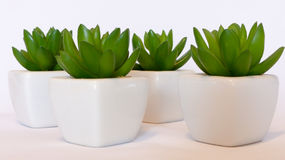 Decoration green plants. Home Decoration four green plants Stock Photography