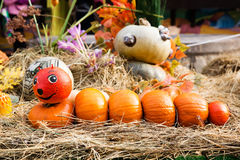 Decoration for the harvest festival: figure in the form of caterpillar made from pumpkins royalty free stock images