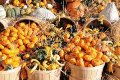Decoration for harvest season Stock Image