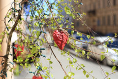Decoration heart on the birch. Red paper heart hanging on the branch of a tree stock images