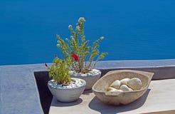 Decoration with herbals on greek balcony on Santorini island, Gr Royalty Free Stock Photo