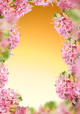 Decoration hyacinth frame Stock Photography