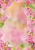 Decoration hyacinth frame Stock Photos