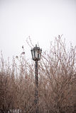Decoration with lantern and tree branch. Dreamy and abstract photo of antique street lantern among tree branches Stock Photos