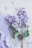 Decoration with lilac flowers and violet knitted sweater texture Royalty Free Stock Photos