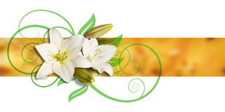 Decoration of Lilies and ornament. Decoration with white lilies on a yellow ochre ribbon and green ornament, two of them blooming, two closed Stock Images