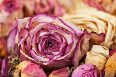 Decoration made of dried roses stock images