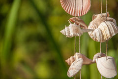 Decoration made of sea shells on the thread Stock Photo