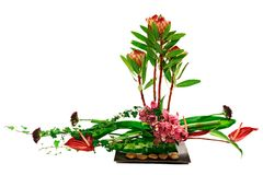 Decoration with orchids Royalty Free Stock Images