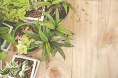 Decoration Ornamental plants in pot Stock Photo