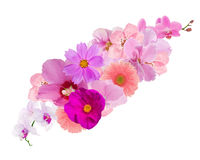 Decoration from pink flowers isolated on white Stock Image