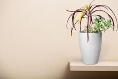 Decoration plant Royalty Free Stock Images