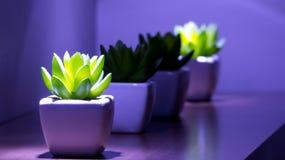 Decoration plant Stock Photo