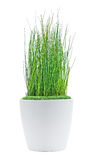 Decoration plant Stock Images