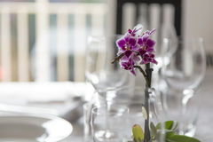 Decoration plant tableware on a white dining table Royalty Free Stock Photography