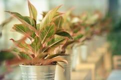 Decoration plants Stock Image