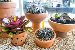 Decoration plants in pots Stock Image