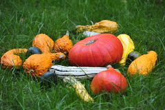 Decoration with pumpkins. Royalty Free Stock Photography