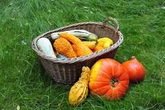 Decoration with pumpkins. Royalty Free Stock Images