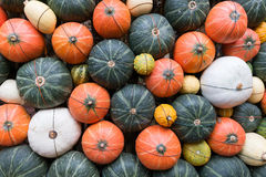Decoration of pumpkins on the wall. For background Royalty Free Stock Photos
