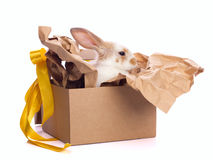 Decoration rabbit in box set Stock Photography