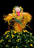Decoration of scarecrow with mum flower Royalty Free Stock Photos