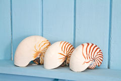 Decoration with shell, Stock Image