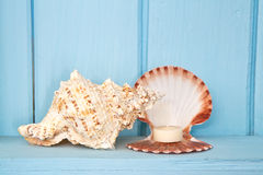 Decoration with shellfish, Stock Photo