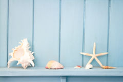 Decoration with shellfish, Royalty Free Stock Images