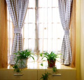 The decoration of small units Royalty Free Stock Photography