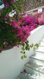Decoration on the street: blooming bright pink flowers cascade falling down from the tree by the stairs. Vertical Stock Images