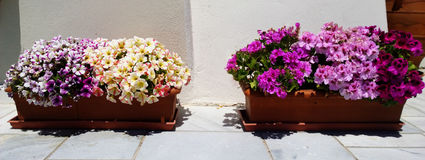 Decoration on the street of Oia in Santorini - flower pots and brightly colored flowers. Greece Royalty Free Stock Image