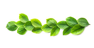 Decoration of the tropical green leaf as frame border on white  Royalty Free Stock Photos
