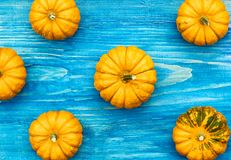 Yellow pumpkins on sea blue wooden background, flat lay, top view, background texture. Thanksgiving or halloween concept. Decoration from yellow pumpkins on sea royalty free stock images