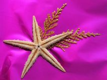 Decorations. Sea star decoration Stock Photo