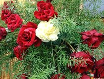 Decorativ wiązka colourful kwiaty fotografia stock