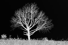 BLACK AND WHITE INVERT OF BARE TREE ON GRASSLAND Royalty Free Stock Photos