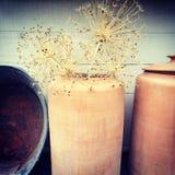 Decorative allium plants in clay vase Royalty Free Stock Images