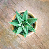 Decorative aloe plant on old wooden surface Stock Photography