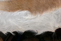 Decorative animal fur as a background stock photo