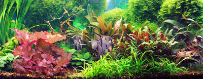 Decorative aquarium. Decorative plant aquarium with fishes Royalty Free Stock Photography