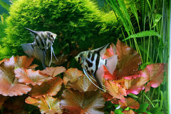 Decorative aquarium Stock Image