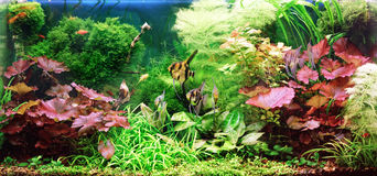 Decorative aquarium. Decorative Royalty Free Stock Image