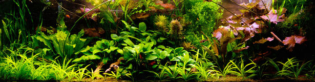 Decorative Aquarium stock images