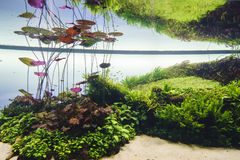 Decorative aquarium Stock Photography