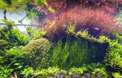 Decorative aquarium. Nature freshwater aquarium in Takasi Amano style of Lisbon, Portugal, Europe Stock Photo