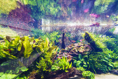 Decorative aquarium Royalty Free Stock Image
