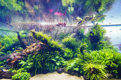 Decorative aquarium Stock Photo