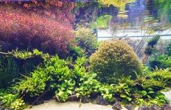 Decorative aquarium Royalty Free Stock Photos